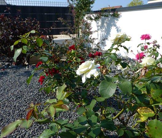 jardin et piscine contemporaine 17