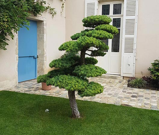 cour jardin 1