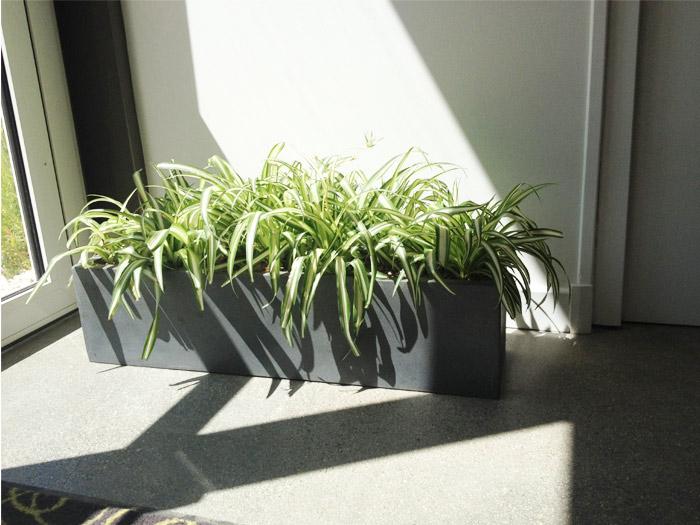 votre paysagiste d 39 int rieur avec des plantes vertes et fleuries. Black Bedroom Furniture Sets. Home Design Ideas